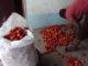 Tomatenprojekt_Kamagambo_Kenia_2018